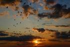 aubedesoiseaux_birds-4509145_1920.jpg