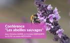 conferencelesabeillessauvagesbaladeau_conf_abeilles.jpg