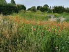 jardintemoinderoucourt_cavin1.jpg